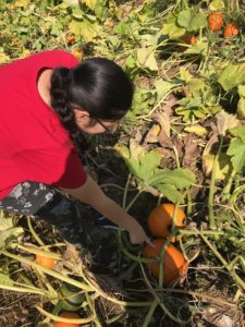 Student picking out her pumpkin.